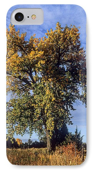 Cottonwood #3 Colorado Ranch Country In Fall IPhone Case by John Brink