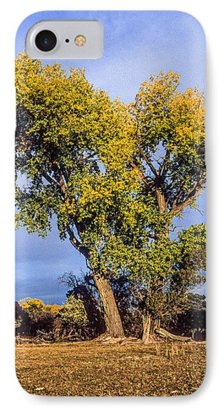 Cottonwood #4 Fall Ranch Colorado IPhone Case by John Brink