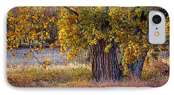 Cottonwood #6 Fountain Creek, Colorado In Fall IPhone Case by John Brink