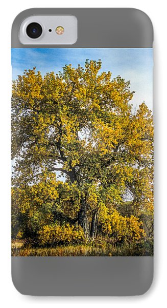 Cottonwood Tree # 12 In Fall Colors In Colorado IPhone Case