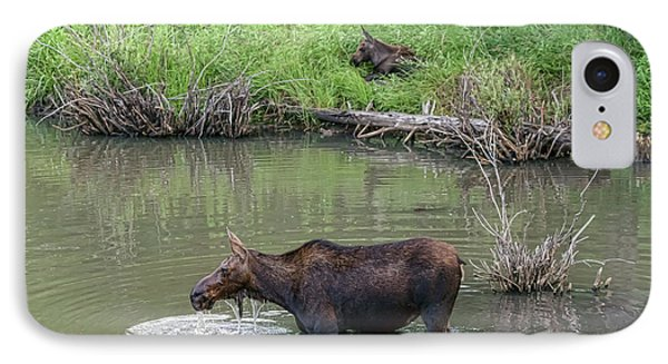 IPhone Case featuring the photograph Cow Moose And Calf by James BO Insogna