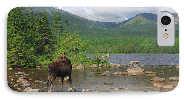 Cow Moose Looking Back At Sandy Stream Pond IPhone Case by John Burk