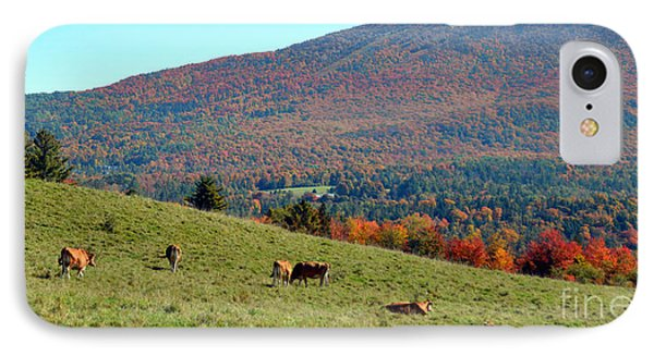 Cows Enjoying Vermont Autumn Phone Case by Catherine Sherman