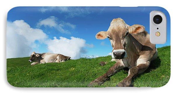 Cows Rest IPhone Case
