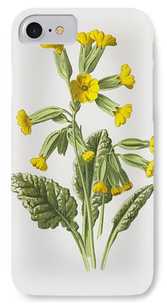 Cowslip IPhone Case by Frederick Edward Hulme