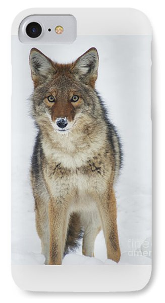 Coyote Looking At Me IPhone Case by Stanza Widen