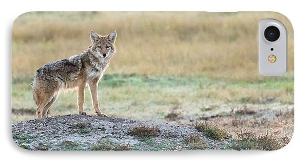 Coyotee IPhone Case by Kelly Marquardt