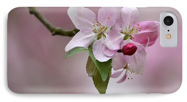 Crab Apple Blossoms IPhone Case by Ann Bridges