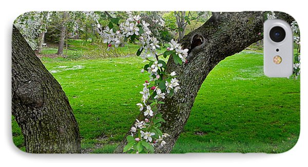 Crabapple Blossoms On A Rainy Spring Day IPhone Case