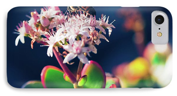 IPhone Case featuring the photograph Crassula Ovata Flowers And Honey Bee by Sharon Mau
