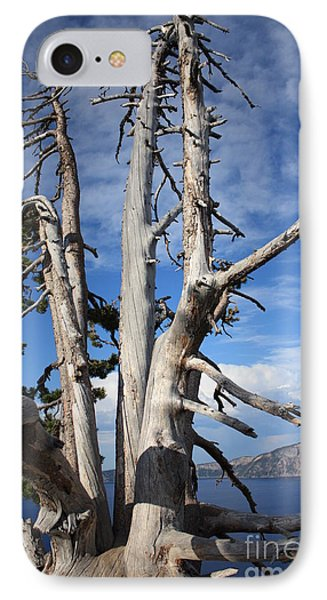 Crater Lake Tree Phone Case by Carol Groenen