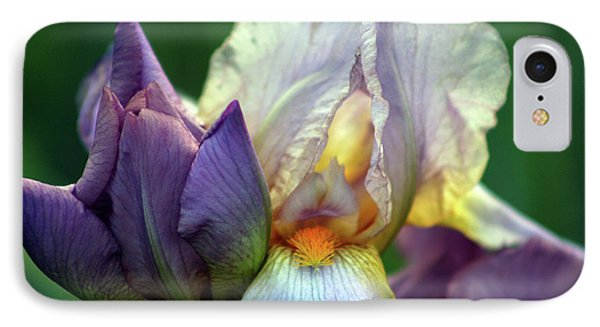 Cream And Purple Bearded Iris With Bud 0065 H_2 IPhone Case