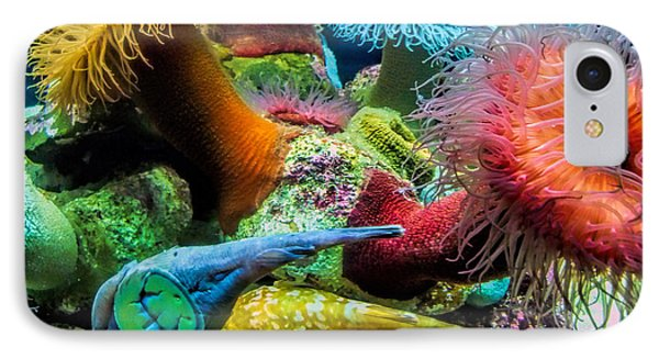 Creatures Of The Aquarium IPhone Case by Lynn Bolt