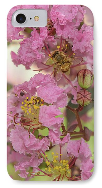 Crepe Myrtle And Bee IPhone Case by Olga Hamilton