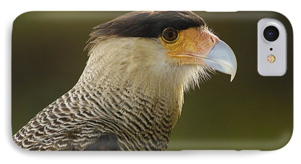 Crested Caracara Polyborus Plancus Phone Case by Pete Oxford