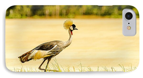 Crested Crane IPhone Case by Patrick Kain