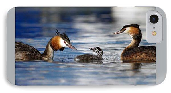 Crested Grebe, Podiceps Cristatus, Ducks Family IPhone Case