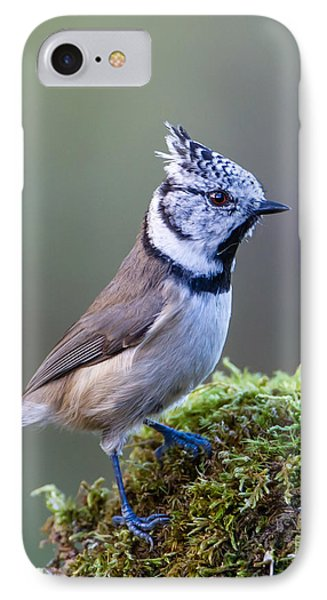 Crested Tit IPhone Case by Torbjorn Swenelius