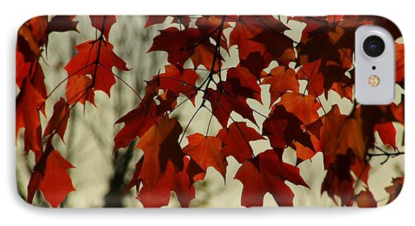 IPhone Case featuring the photograph Crimson Red Autumn Leaves by Chris Berry