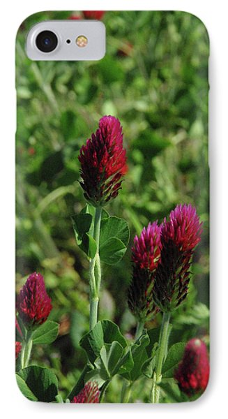 Crimson Clover IPhone Case by Robyn Stacey