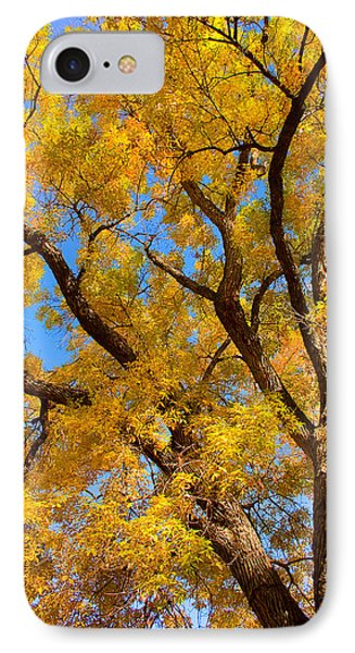 Crisp Autumn Day Phone Case by James BO  Insogna