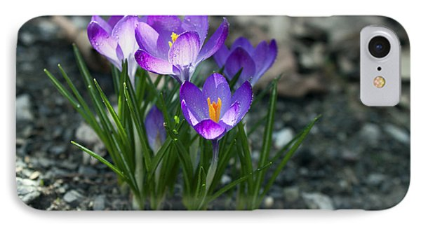IPhone Case featuring the photograph Crocus In Bloom #2 by Jeff Severson