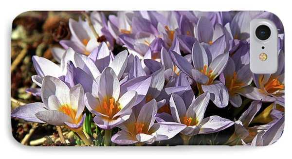 Crocuses Serenade IPhone Case by Ed  Riche
