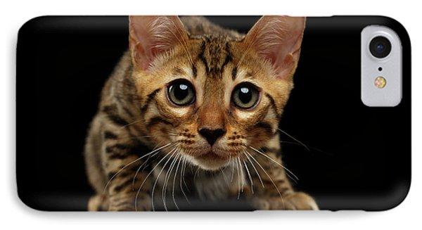 Crouching Bengal Kitty On Black  IPhone Case by Sergey Taran