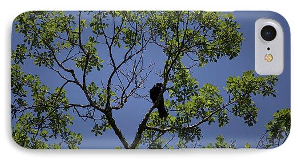 Crow IPhone Case by Brandy McKnight