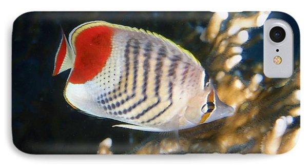 Crown Butterflyfish Closeup IPhone Case