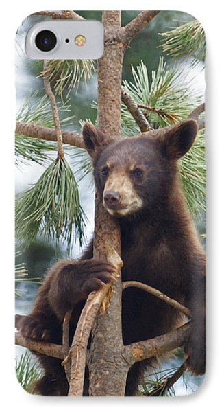 Cub In Tree Dry Brushed IPhone Case by Ernie Echols