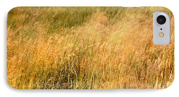Curing Grass In Field, Quail Hollow IPhone Case by Panoramic Images