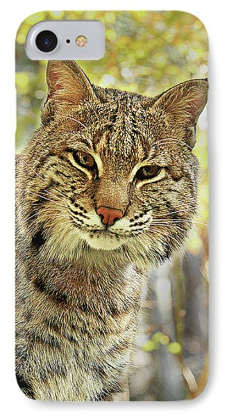 IPhone Case featuring the photograph Curiosity The Bobcat by Jessica Brawley