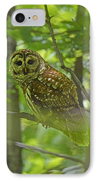 Curious Barred Owl IPhone Case