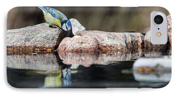 Curious Blue Tit IPhone Case by Torbjorn Swenelius