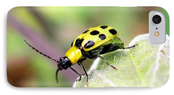 IPhone Case featuring the photograph Curious Bug by Irina Hays