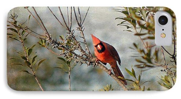 Curious Cardinal IPhone Case