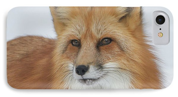 Curious Fox IPhone Case by Jack Bell
