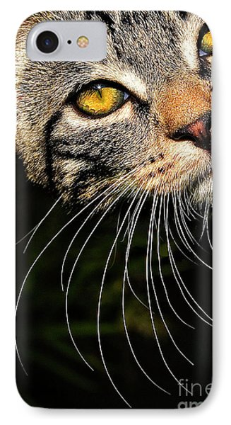 Curious Kitten Phone Case by Meirion Matthias