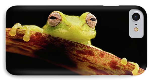 Curious Little Amazonian Tree Frog IPhone Case by Dirk Ercken