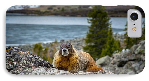 Curious Marmot IPhone Case by Michael J Bauer