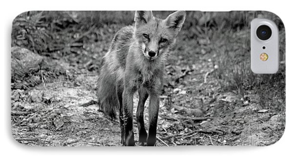 Curious Red Fox Black And White IPhone Case by Debbie Oppermann