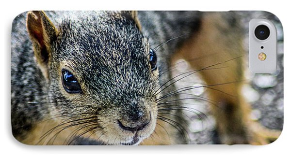 IPhone Case featuring the photograph Curious Squirrel by Joann Copeland-Paul