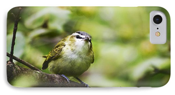 Curious Vireo Phone Case by Christina Rollo