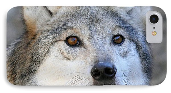 Curious Wolf IPhone Case by Elaine Malott