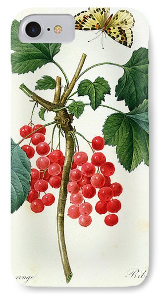Currants  Red IPhone Case by Pierre Joseph Redoute