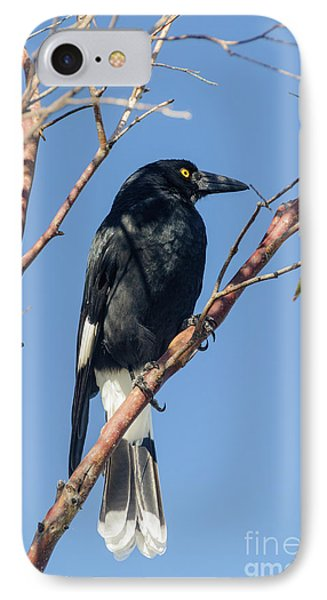 Currawong IPhone 7 Case by Werner Padarin