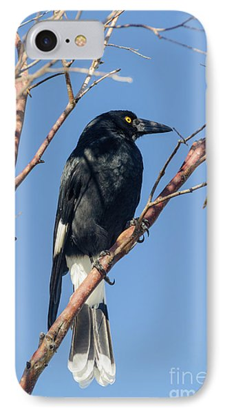 Currawong IPhone Case by Werner Padarin