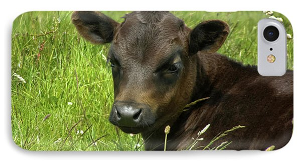 Cute Cow IPhone Case by Terri Waters