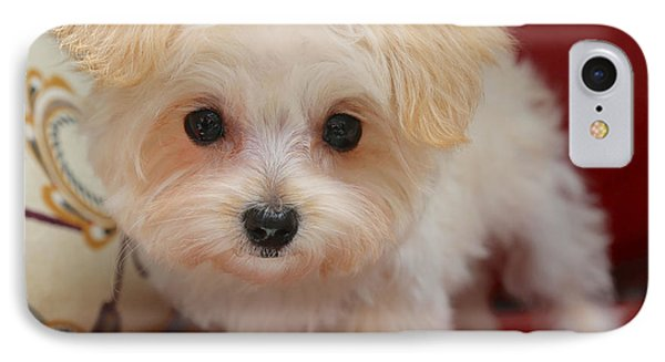 Cute Maltipoo IPhone Case